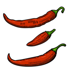 Set of chili pepper isolated on white background vector