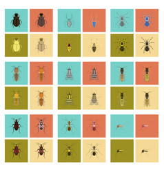 assembly flat insect wasp soldier bug ant vector image