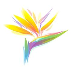 Bird paradise flower vector