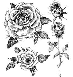 Flowers set Hand drawn rose etch style vector image