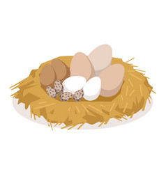 nest with eggs of different birds poultry vector image