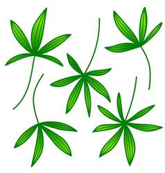 palm leaf set on white background vector image