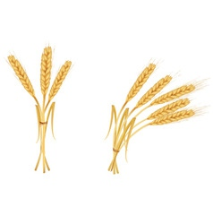 two group wiith ears of wheat vector image