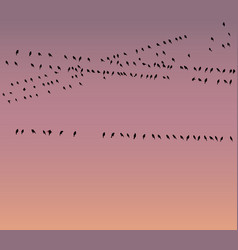 Wireless communications and birds vector