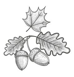 Sketch of an oak leaf and acorn vector image