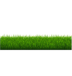 green grass white background vector image