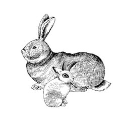 hand drawn rabbit and bunny vector image