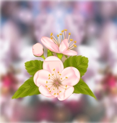 Cherry Blossom Blur Nature Background vector image