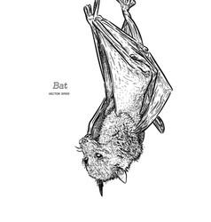 bat drawing engraving ink line art vector image