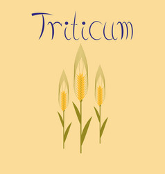 Flat on background natural triticum vector