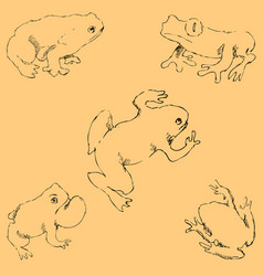 Frogs sketch by hand pencil drawing by hand vector