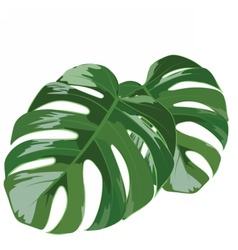 Palm tree leaves isolated vector image