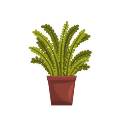 fern indoor house plant in brown pot element for vector image vector image