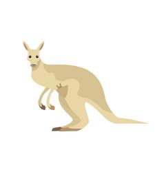 kangaroo in flat design vector image