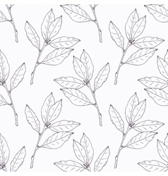 Hand drawn bay leaf and branch outline seamless vector image vector image