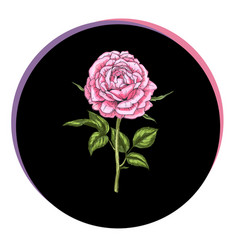 Beautiful rose flower in a black circle floral vector