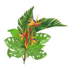 beautiful strelitzia reginae tropical flowers vector image