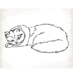 Fluffy cat in sketch style on a white background vector