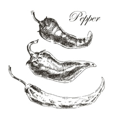 Hand drawn chili pepper sketch set ink and vector