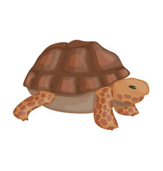 Sea turtle iconcartoon icon vector