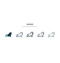 walrus icon in different style two colored and vector image