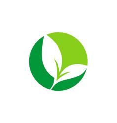 Green leaf seed plant logo vector