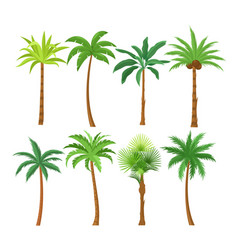 palm trees flat set exotic vector image