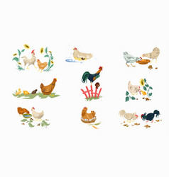 set farm or home chickens bird with rooster vector image