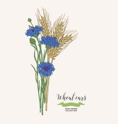 Wheat ears with cornflowers rustic bouquet plants vector