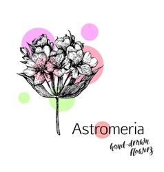Astromeria flower for wedding or birthday card vector image vector image