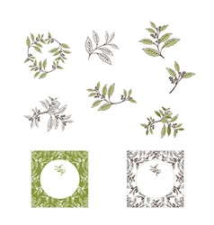Yerba Mate Tea Leaf vector image vector image