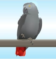 African Grey Parrot vector