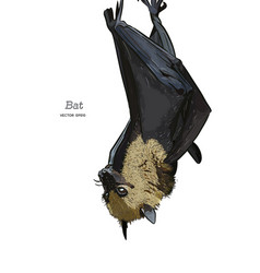 bat drawing engraving ink line art vector image