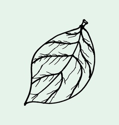 Drawing of leaves vector