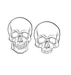 human skull isolated in hand drawn realistic line vector image