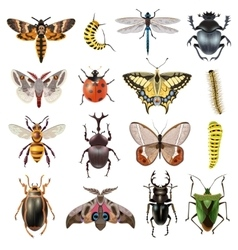 Insects Icons Set vector