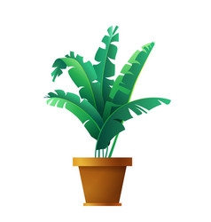 banana palm leaves botanical exotic tropical vector image