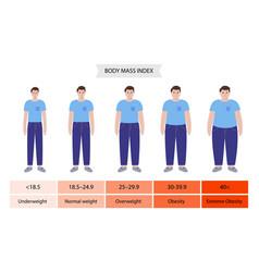Body mass index man vector