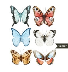 Butterly set vector