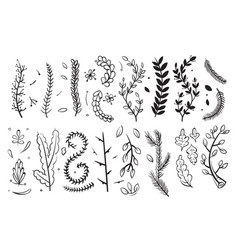 Hand drawn decorative branches with leaves and vector