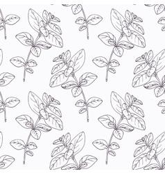 Hand drawn oregano branch outline seamless pattern vector
