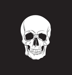 human skull isolated in hand drawn realistic vector image