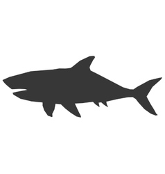 Shark silhouette icon vector