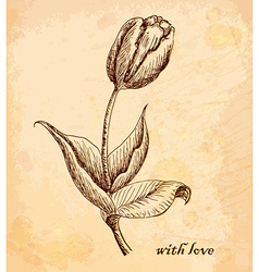 Vintage old background with tulip with love Hand vector image