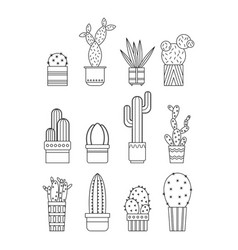 cacti and succulents flat linear icons vector image vector image