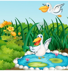 A pond with ducks vector image vector image