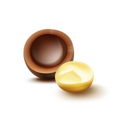 Macadamia nut with shell vector