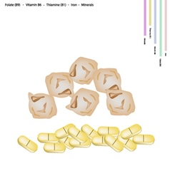 Dried Chickpea with Vitamin B9 B6 B1 and Iron vector image