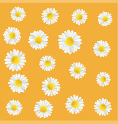 Summer meadow flowers with chamomile vector