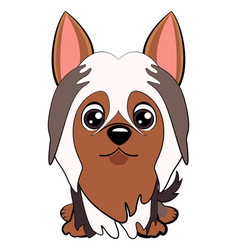 dog silky cartoon vector image vector image